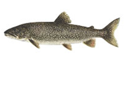 Fish-tiles-LAKETROUT.jpg