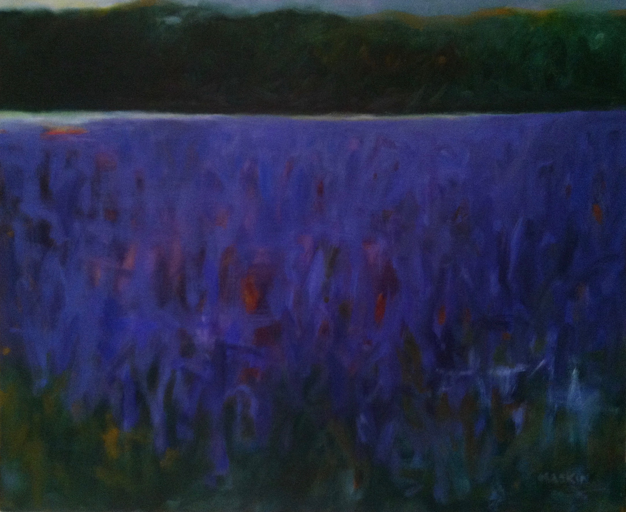 Lavender Fields-Dusk
