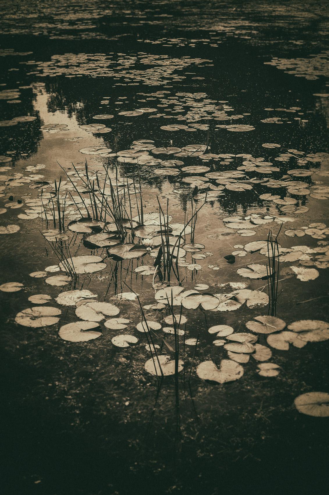 Lagoon
