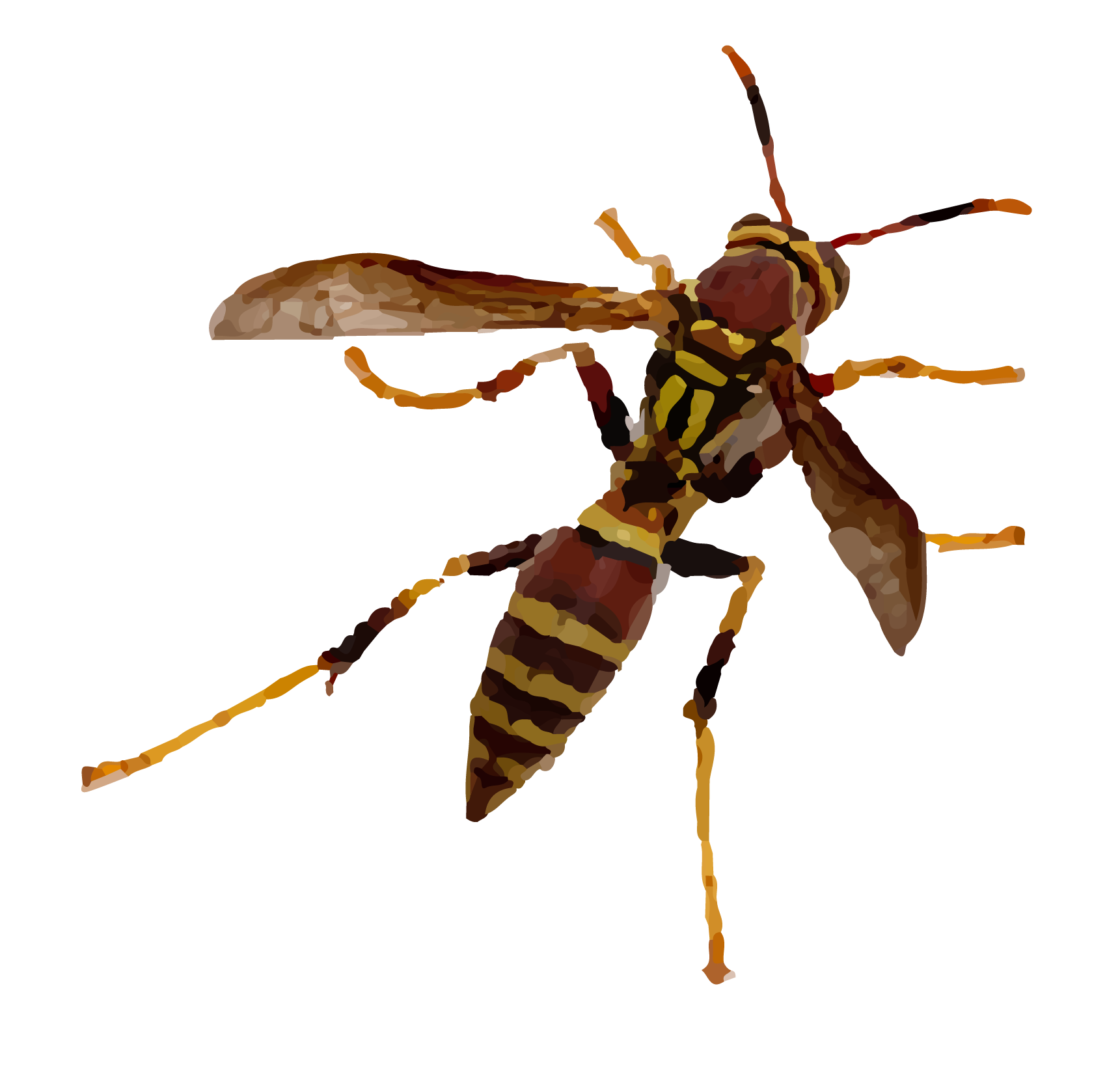 """Bees & Wasps - There are a few essential differences between a wasp and a bee. Most wasps feed on insects, spiders and other animal matter. Most bees, on the other hand, feed on pollen and nectar (although there are a few parasitic species of bee). Bees are nearly always """"hairy"""" with short legs, which assists in their pollen-collecting activity. Wasps typically have smooth, slender bodies that are """"pinched"""" at the waist and have longer legs than bees."""