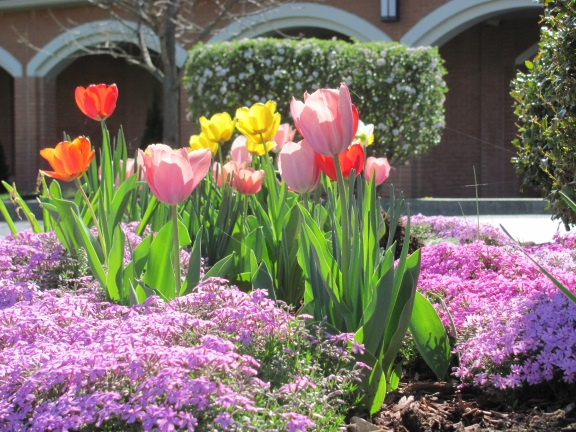 tulipsblog2015.jpg