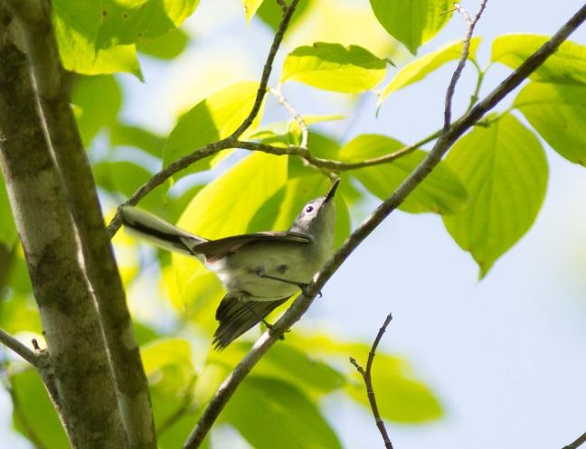 which-birdblog2015.jpg