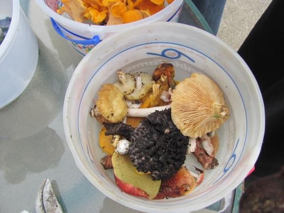 mushroompickingquestionableblog2015.jpg