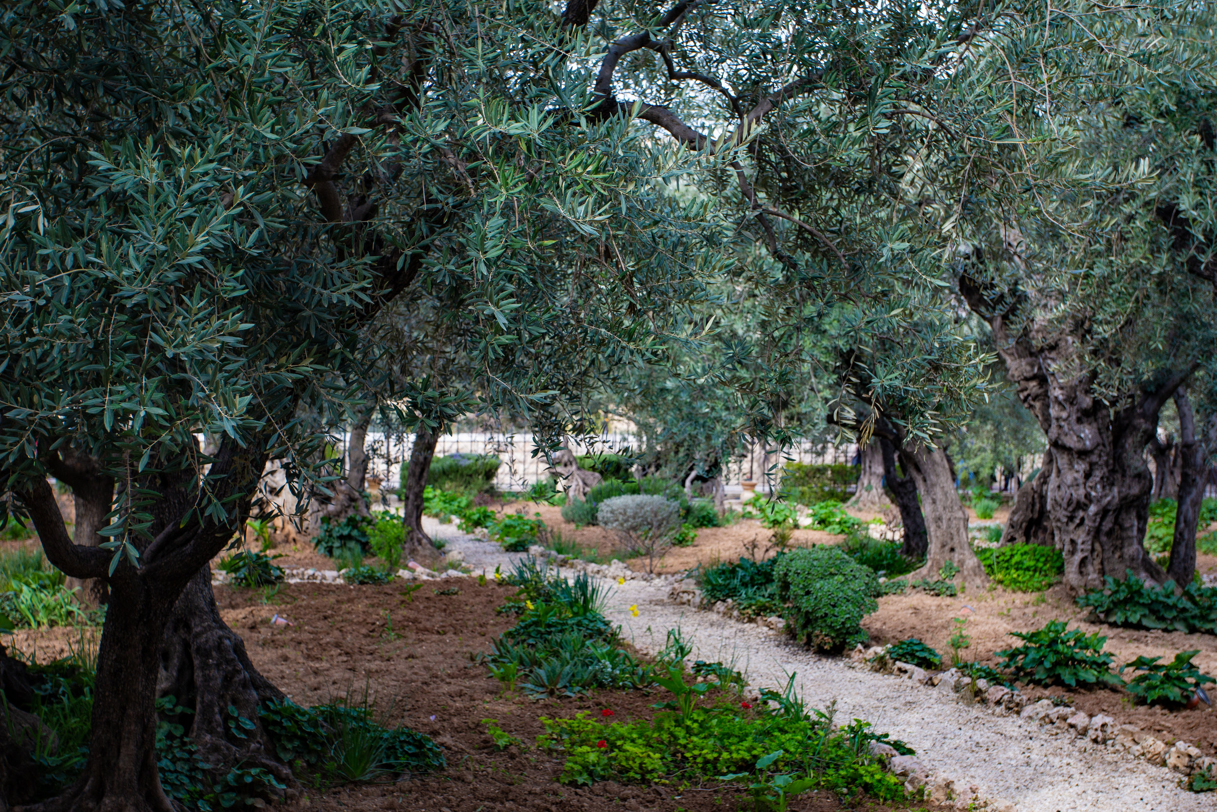 Garden of Gethsemane  Photo by  Stacey Franco  on  Unsplash