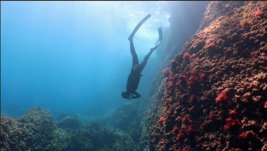 free diving.PNG