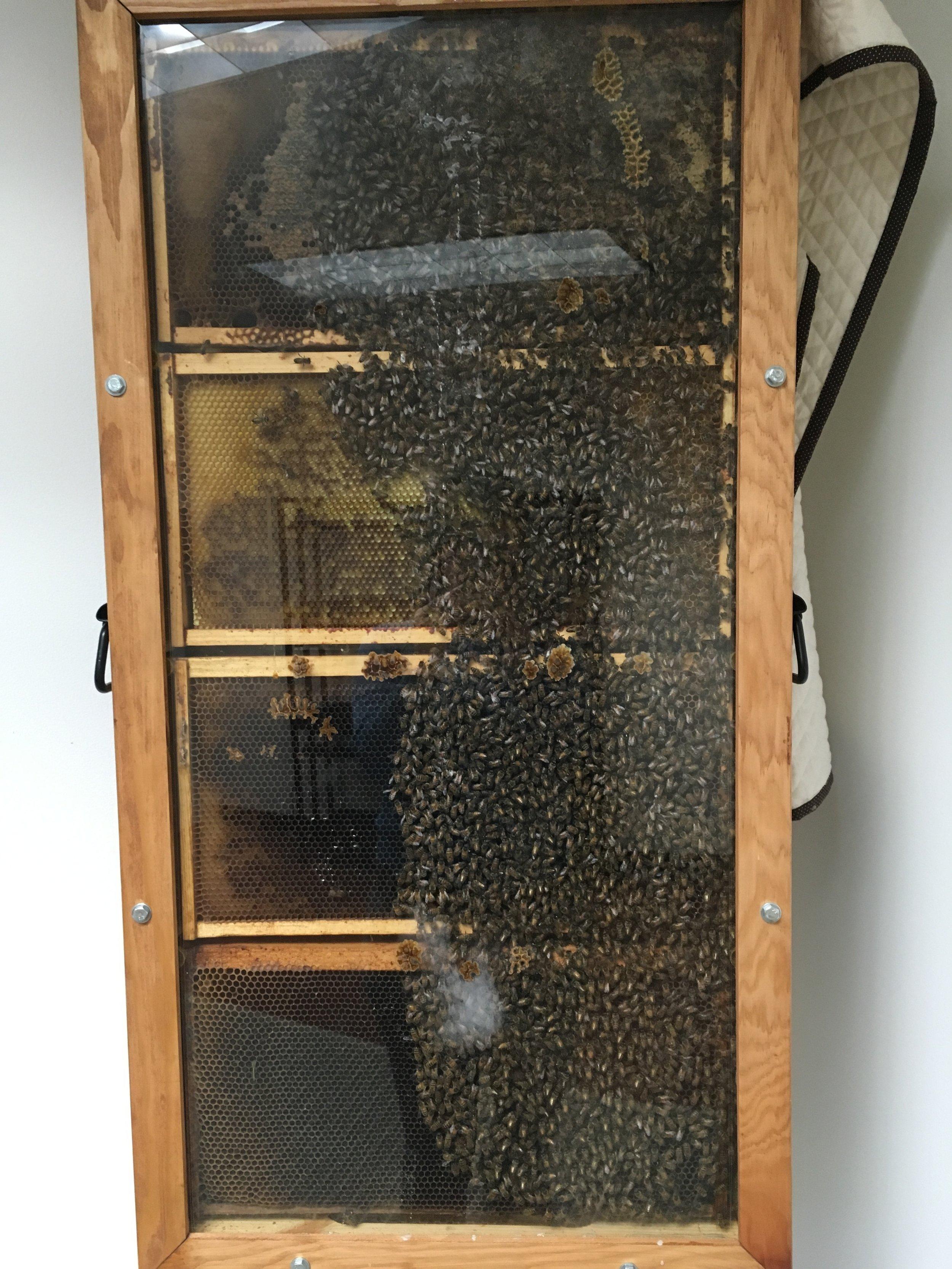 observation hive Feb. 14th.JPG