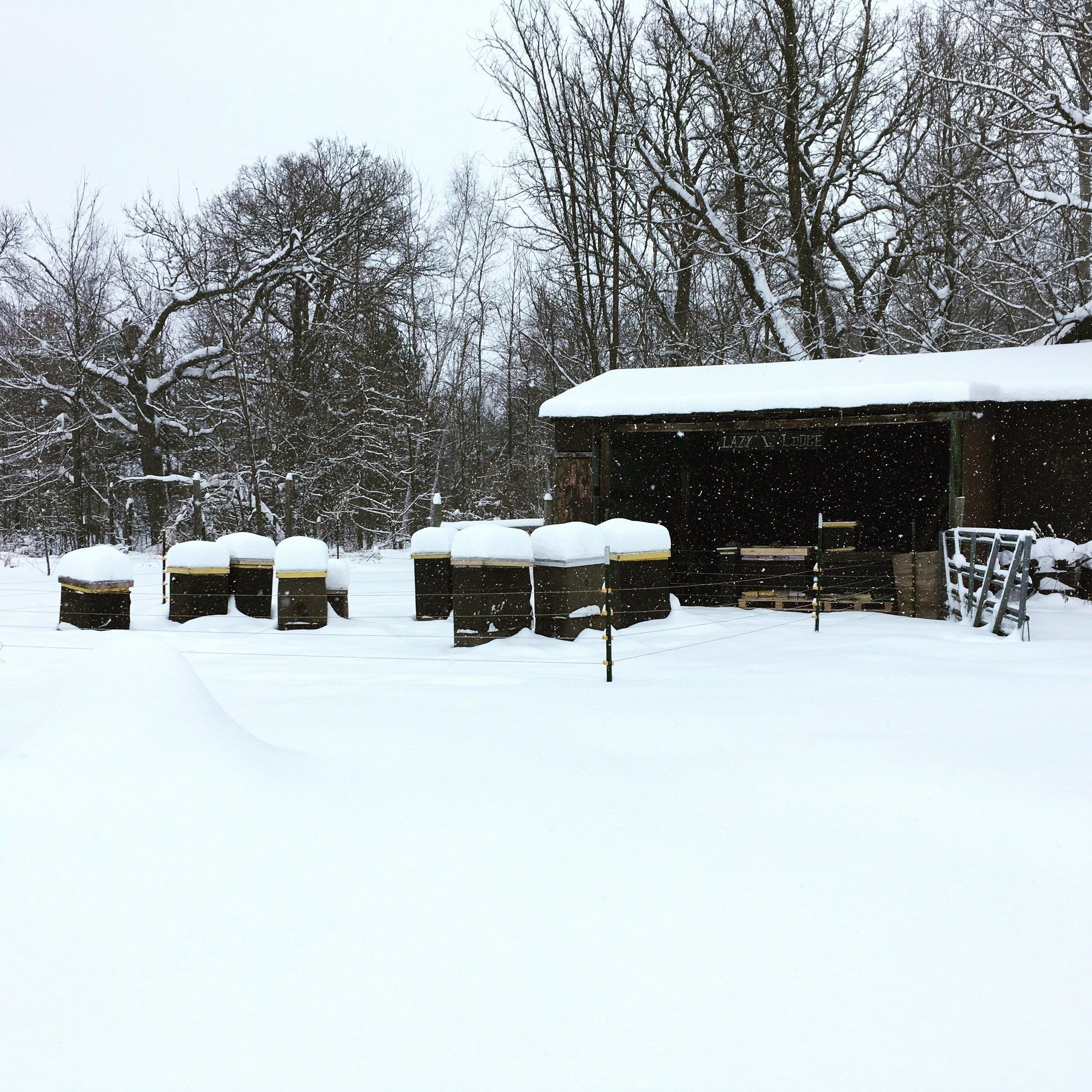 winter+in+the+beeyard.jpg