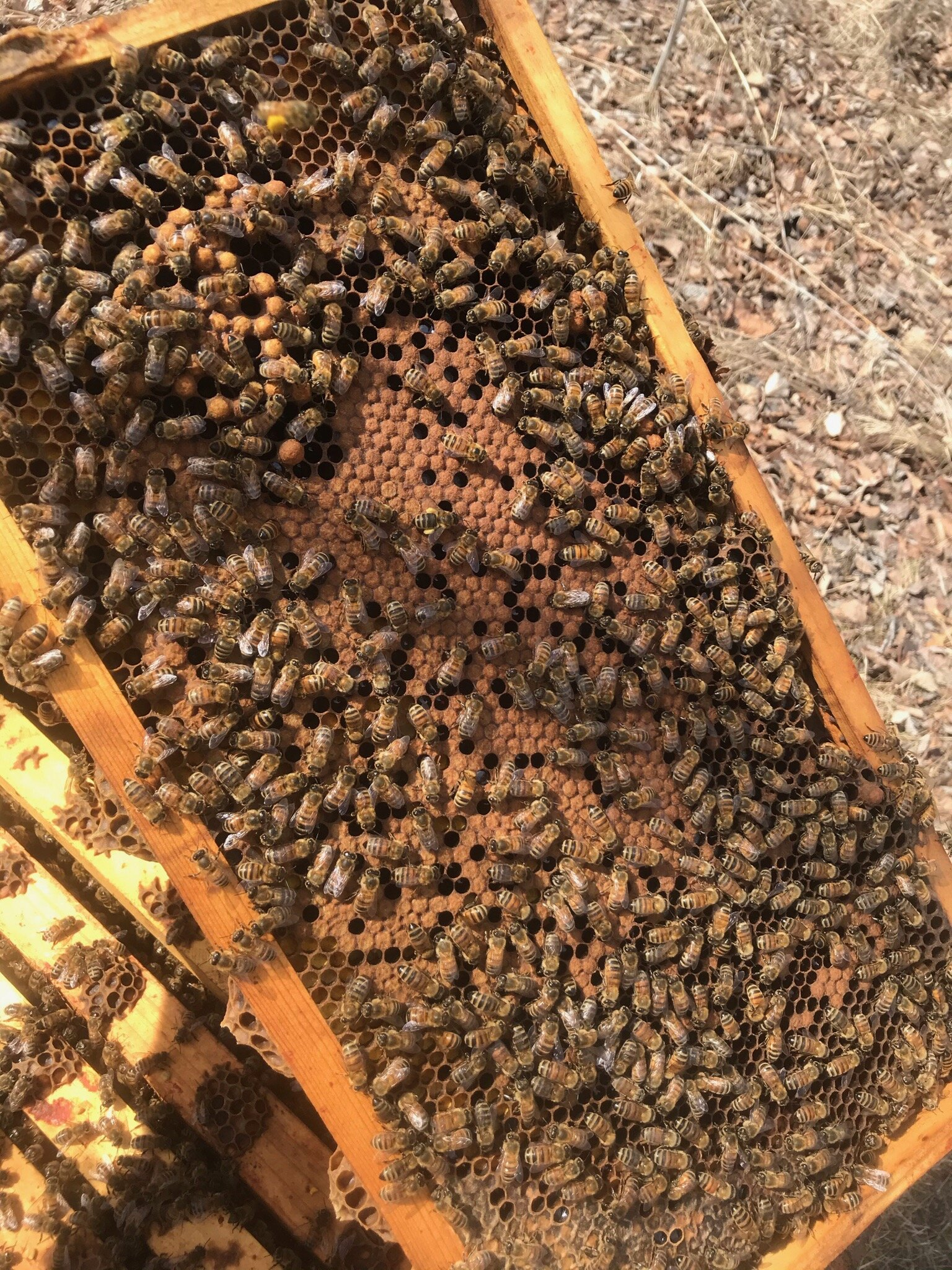 BEEing Born On The Same Day Makes Our Birthday Extra Sweet  Shared Birthday Same Day Birthday  bees honey honeybees honeycomb beekeeper
