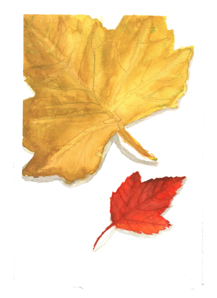 Watercolour Sketch by Jacqueline Gilchrist