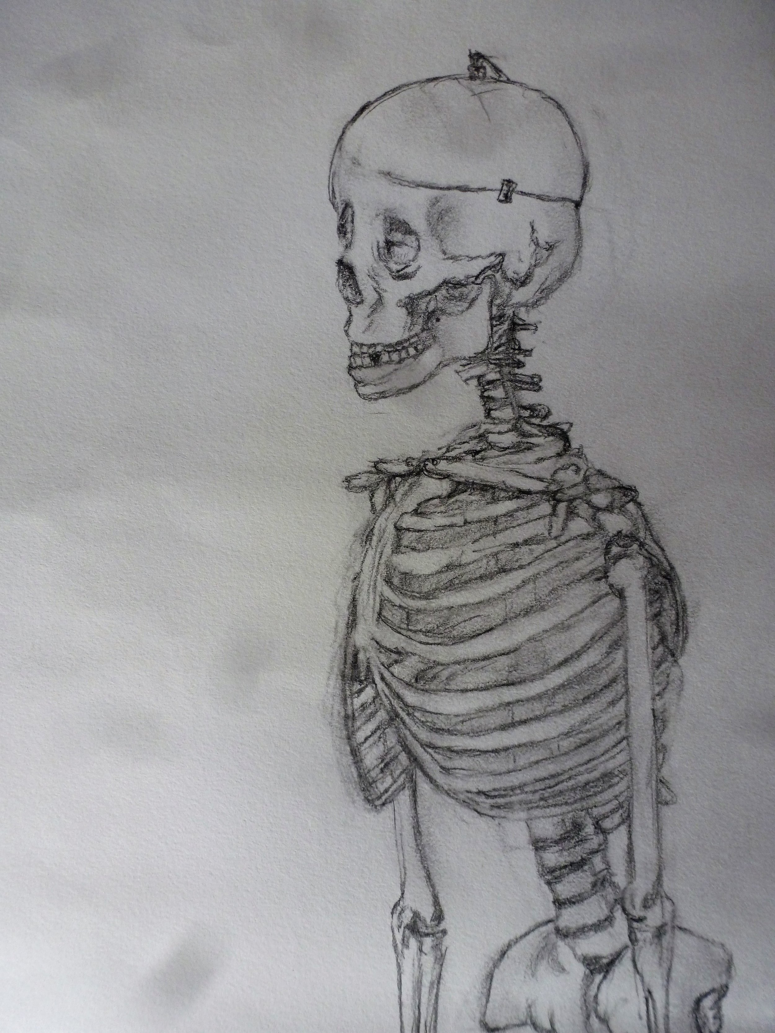 Pencil Sketch by Jacqueline Gilchrist (10).JPG