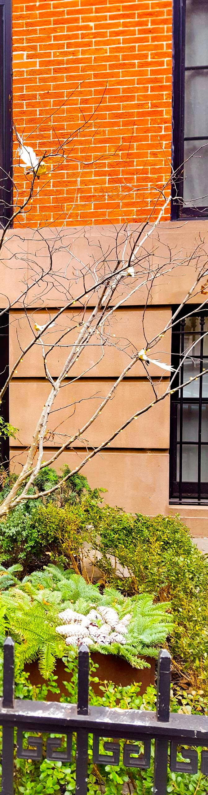 Random Tree with Birds.jpg