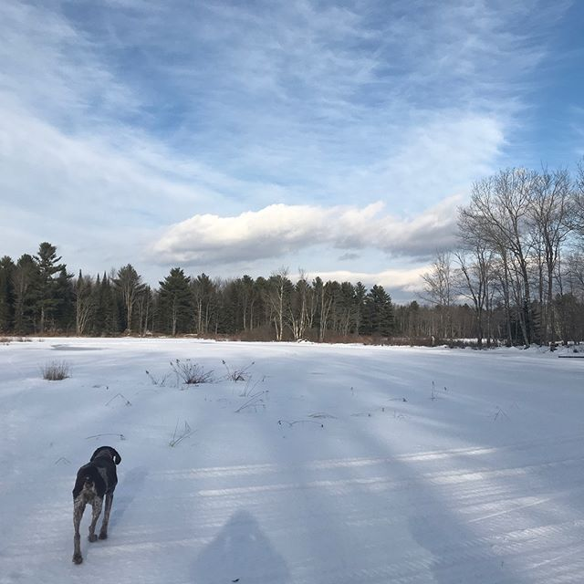#fieldrecording on a frozen river in mid coast Maine. German Shorthaired Pointer included, naturally. #gameaudio #germanshorthairedpointer #maine #sounddesign