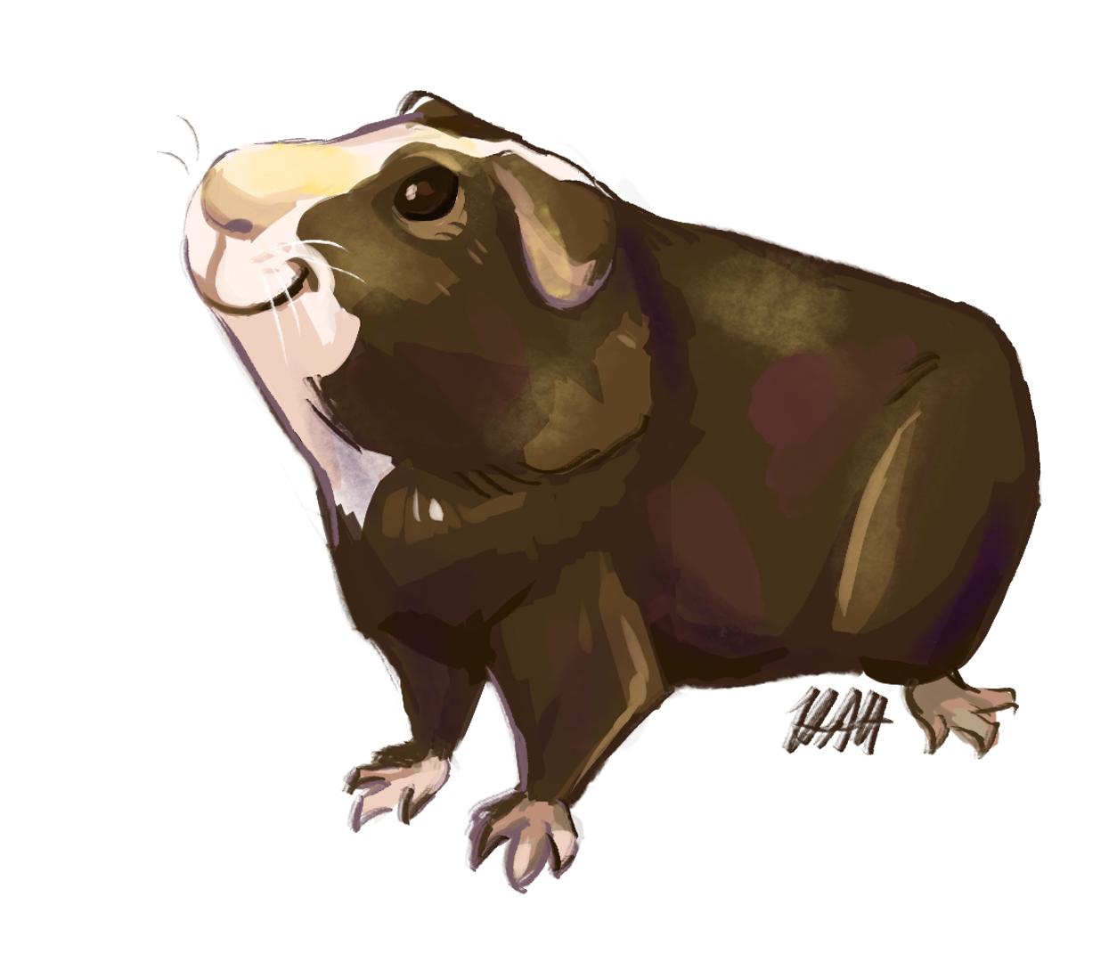 Guinea Pig Commission