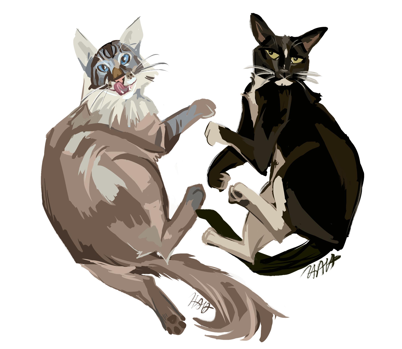 Double Cat Commission
