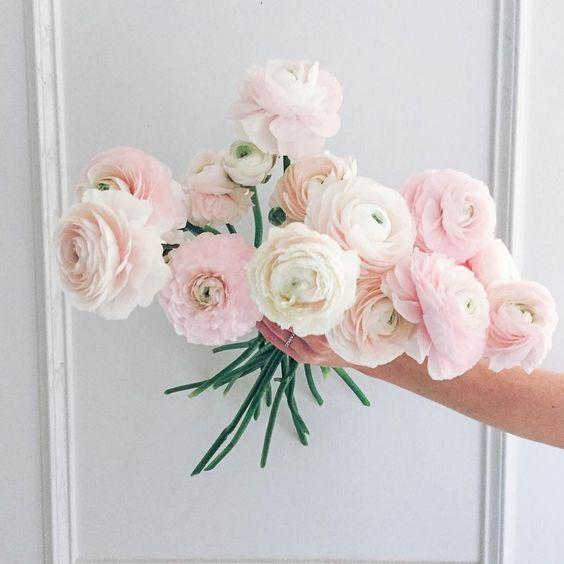 Pale Pink Ranunculus.jpg