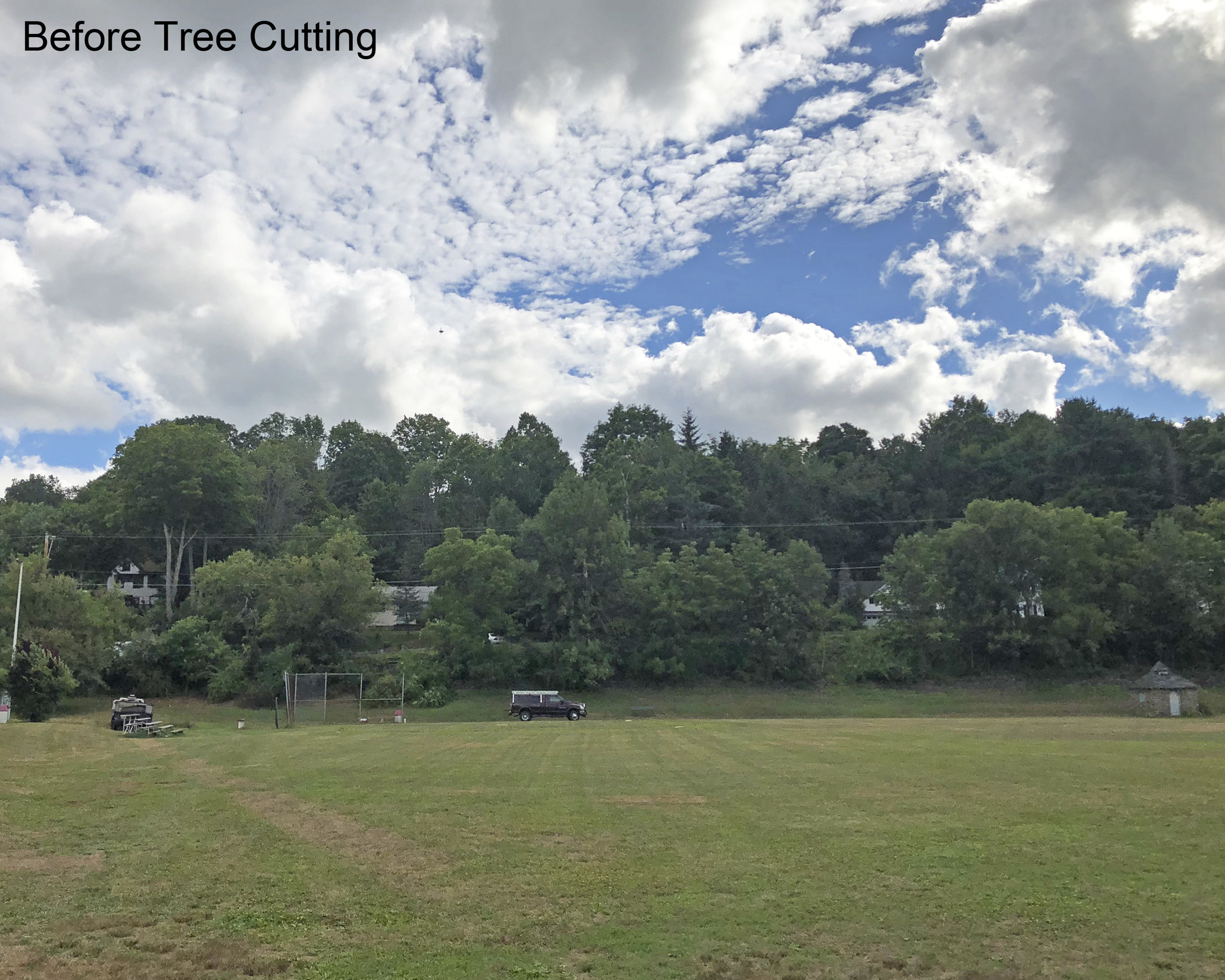 Before Tree Cutting.jpg