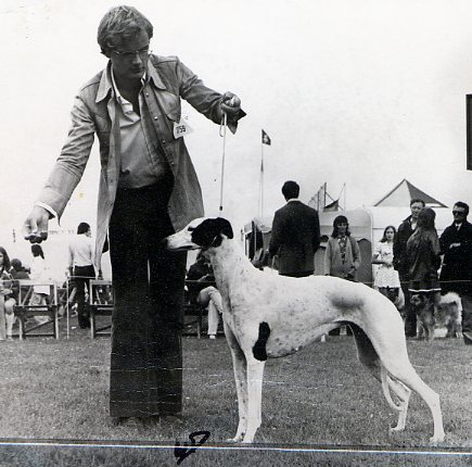 Int. & UK Ch. Gulds Black & White Lady , shown in England by Bo. Lady was born in 1969, sired by Int. Ch. Black Diamond of Pink Sunshine x Int. Ch. Guld. She was bred by Ann Gustafsson and during most of her show career owned and shown by Bo Bengtson.