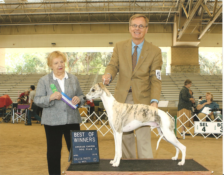 Ch. Bohem Final Act  (Kirby), b. 2011  Owned by Meredith McCown