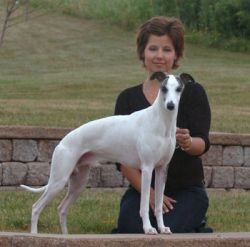 Ch. Bohem Bon Vivant , born 2004  Multiple Group placements, AWC Specialty Select. Sire of champions.  Owner Jane Cooney-Waterhouse