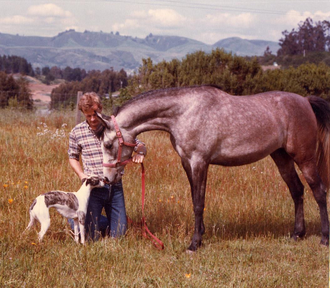 Swedish import  Colt's Halfpenny  (Linda) with Bo  and the Arabian mare Raffdazona, mid-1980s.