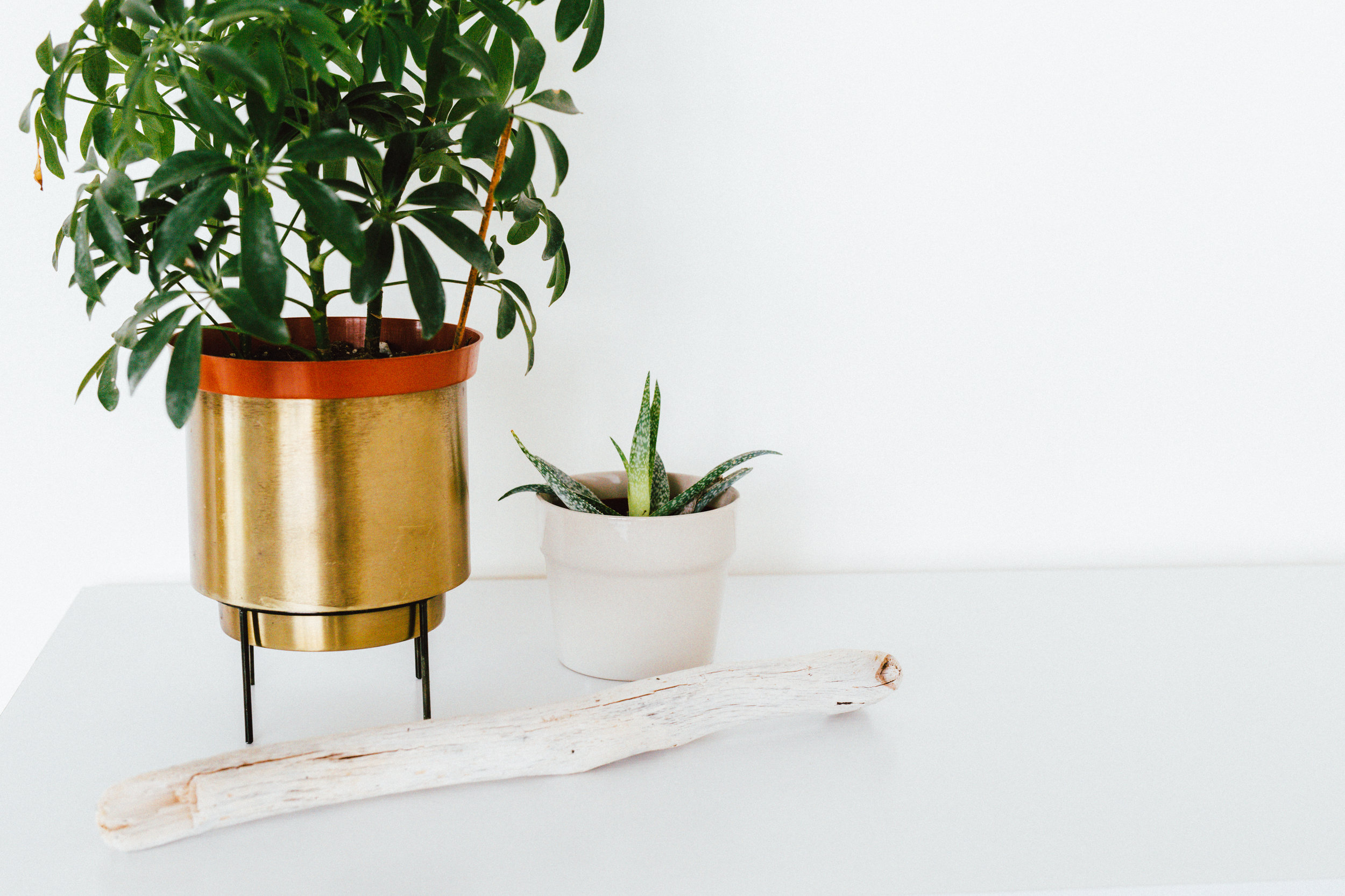 Plant Hire for your Workplace - modern | nourishing | sustainable