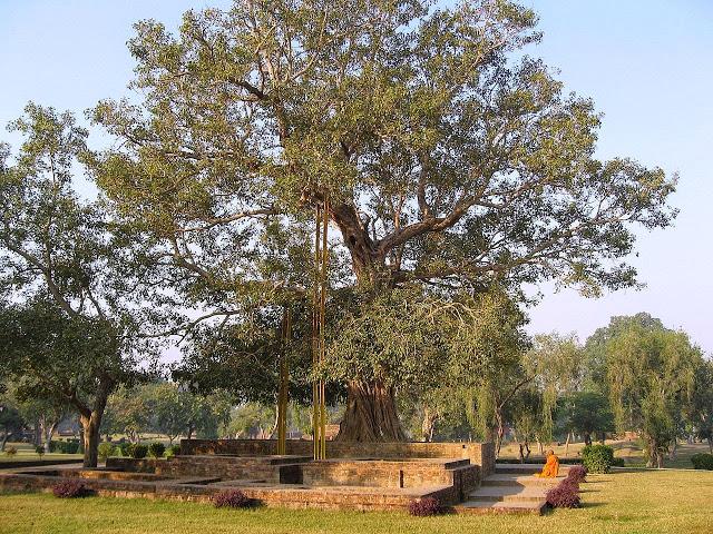 The Bodhi Tree.jpg