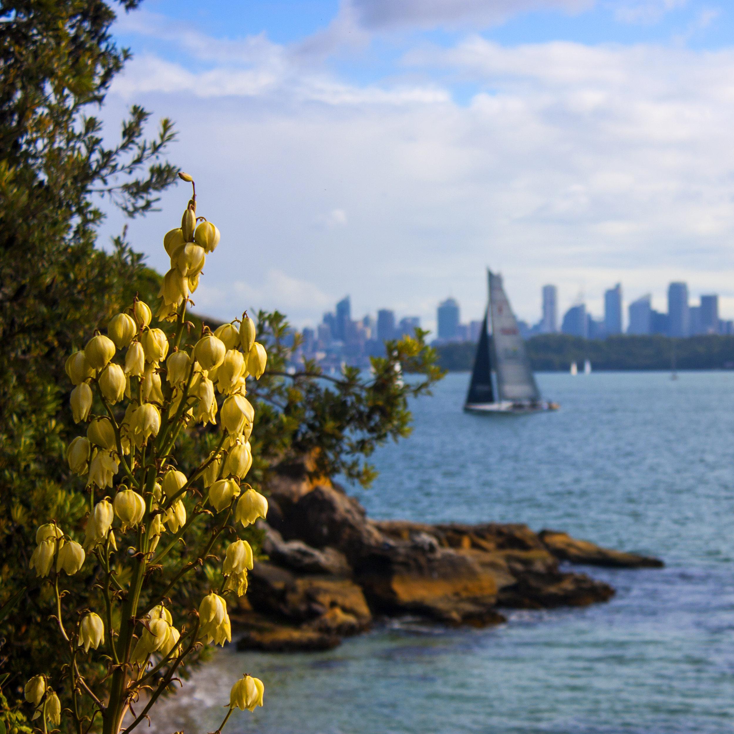 Australia_Sydney_Watson's Bay_Sail Boat_Sydney Skyline.jpg