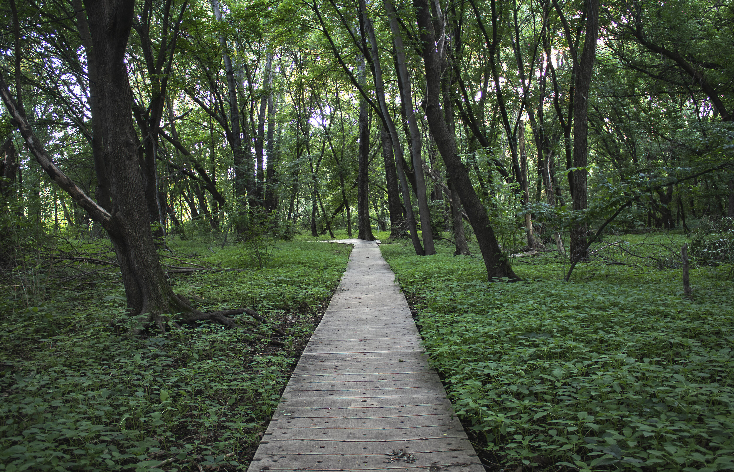 MPLS_Roberts Bird Sanctuary - Boardwalk_001_IMG_3361.jpg