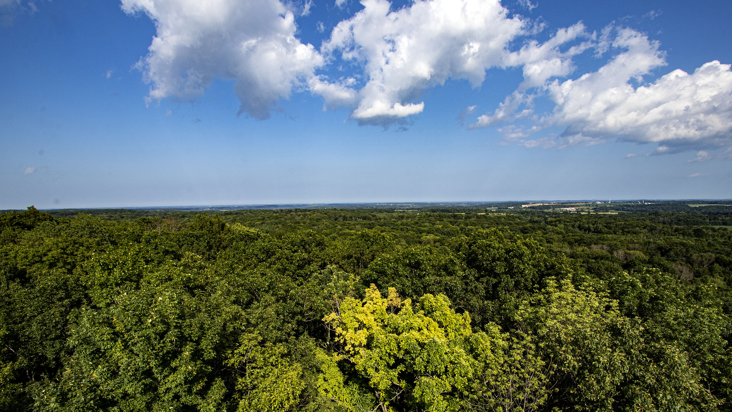 Kettle Moraine Northern Unit_Parnell Tower_Top of Tower_Tree Tops_014_20190723_IMG_0712.jpg
