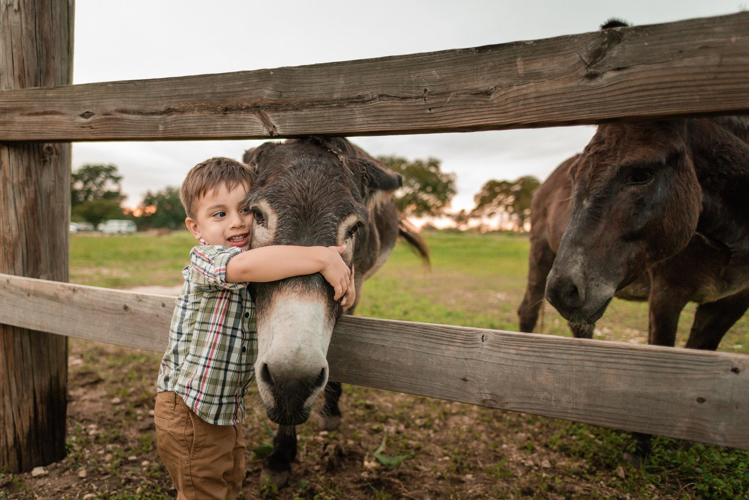 Donkey-13.jpg