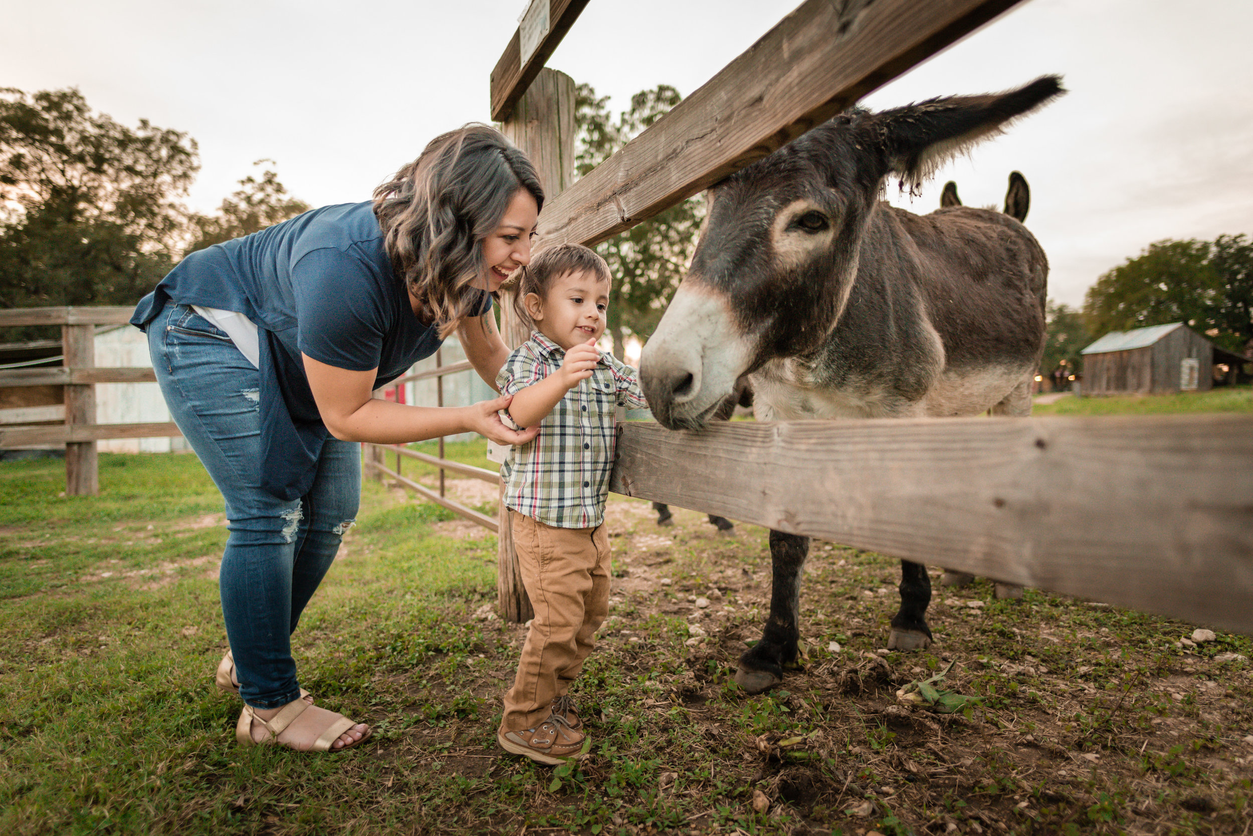 Donkey-3.jpg
