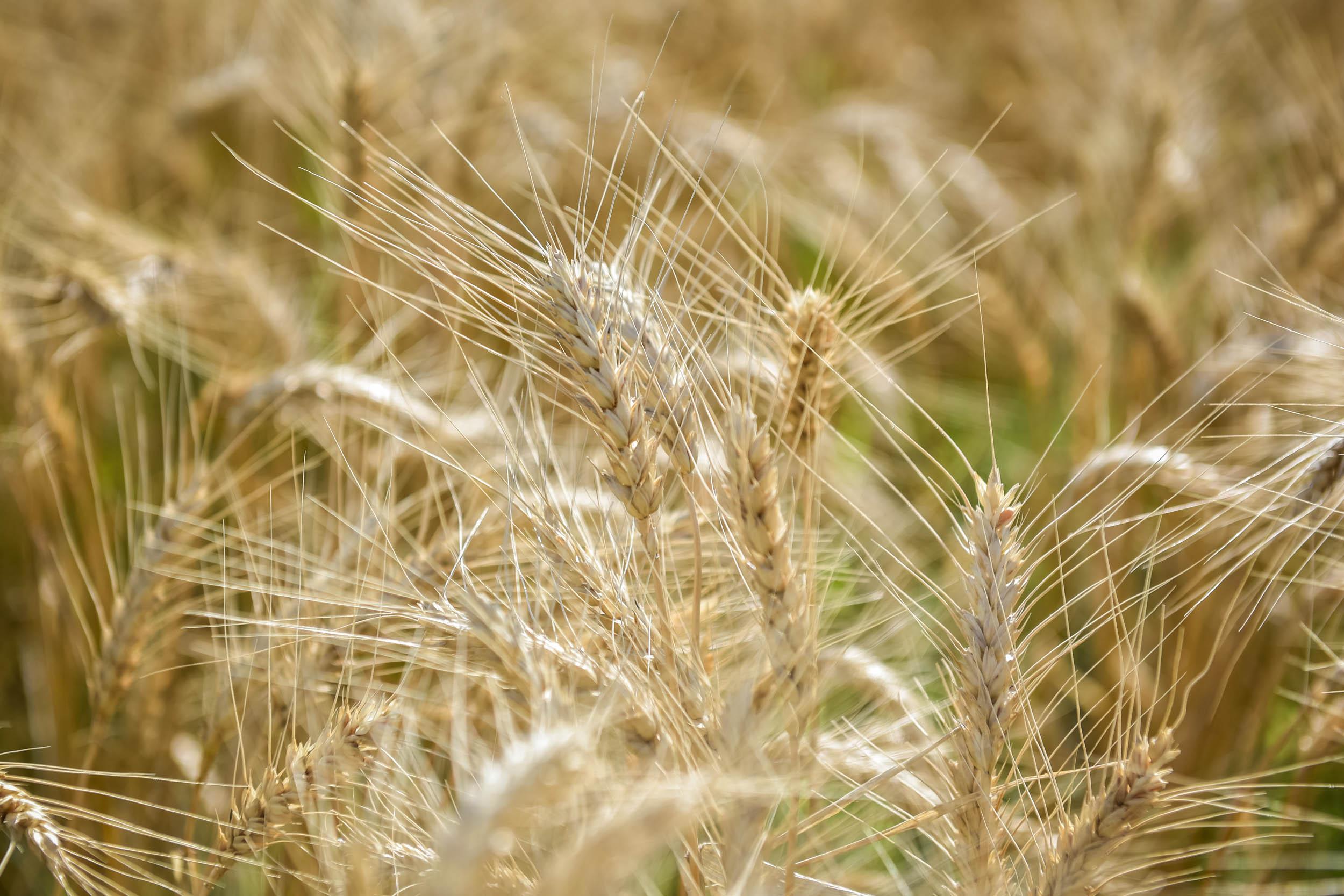 Indigo Agriculture   Plant Microbiome Technology 0014.jpg