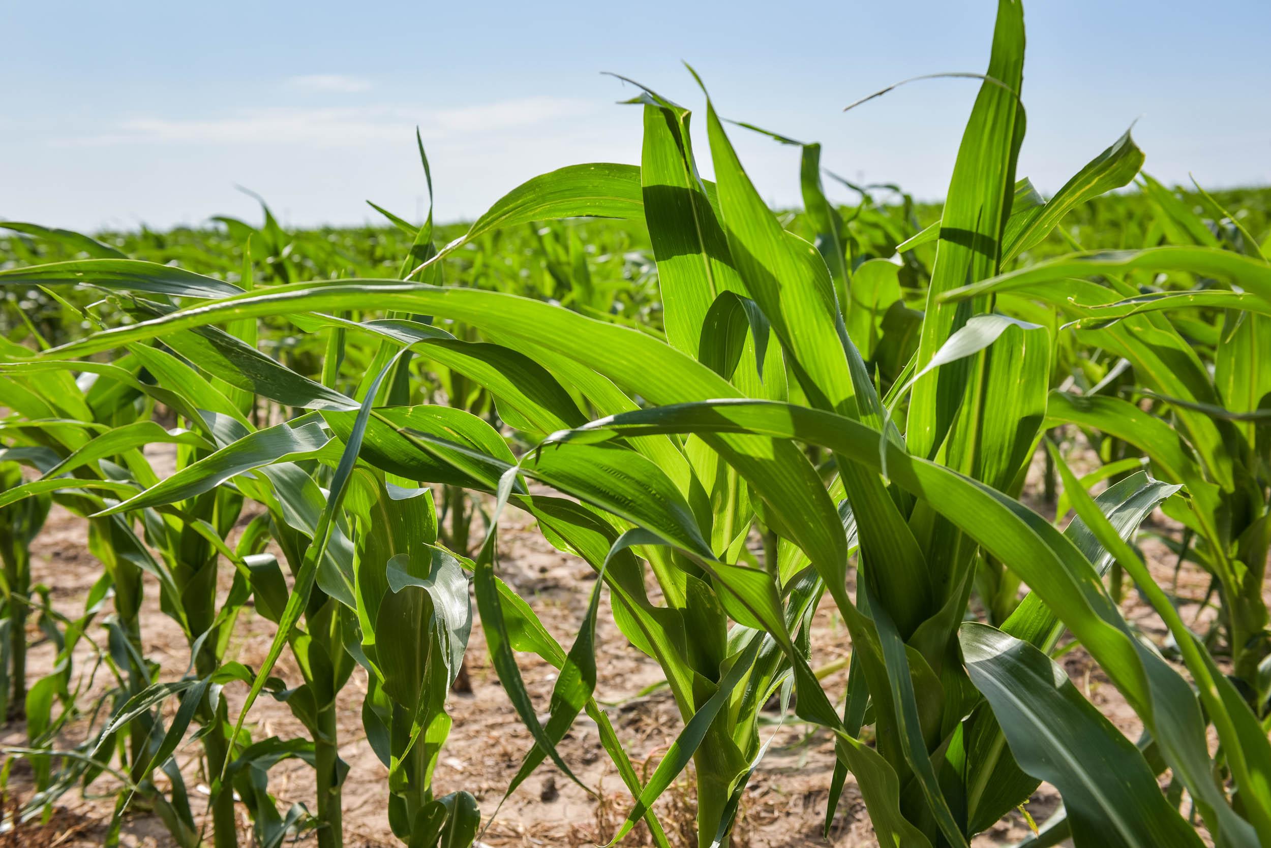 Indigo Agriculture   Plant Microbiome Technology 0057.jpg