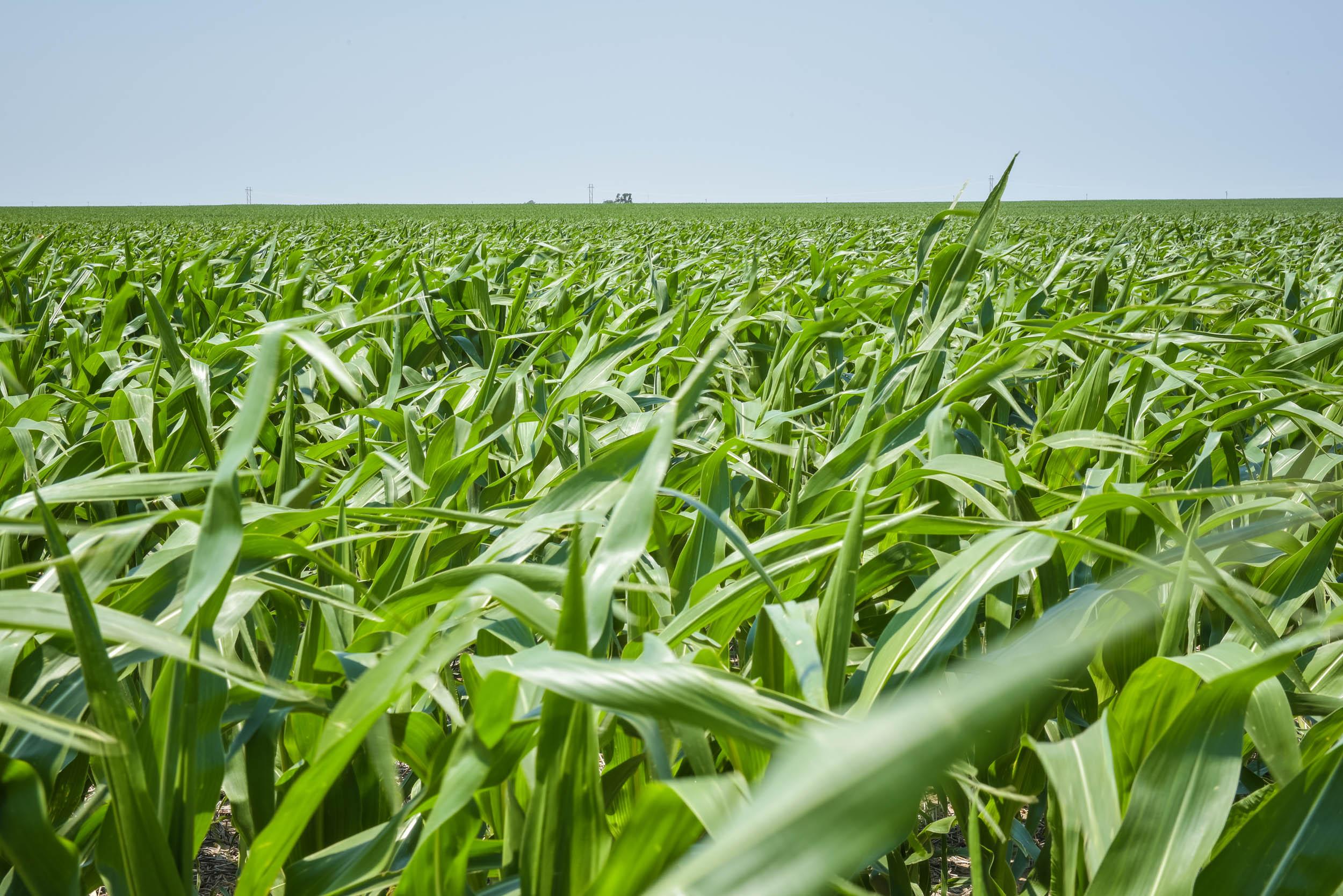 Indigo Agriculture   Plant Microbiome Technology 0090.jpg