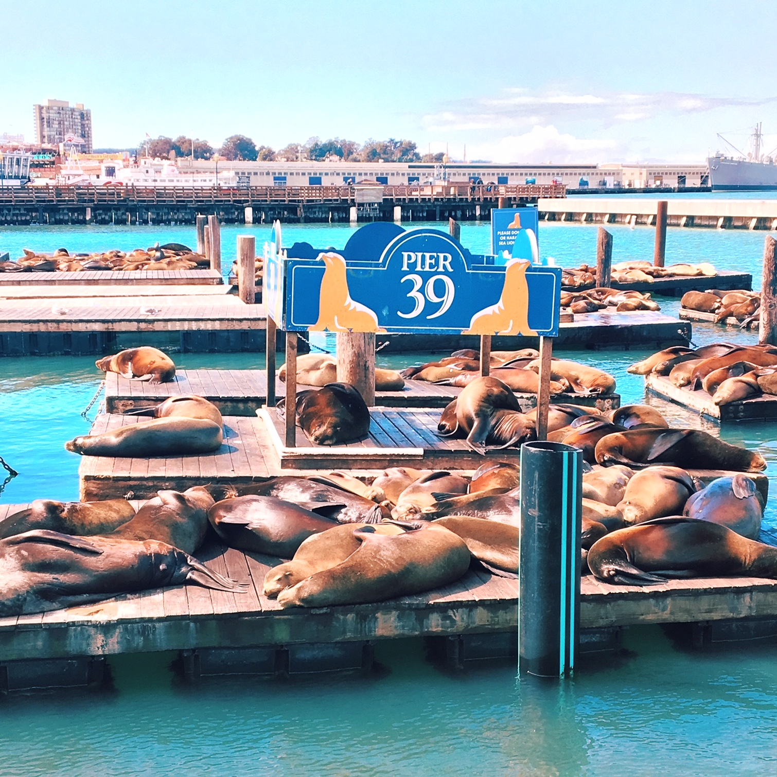 Pier 39, San Francisco, CA