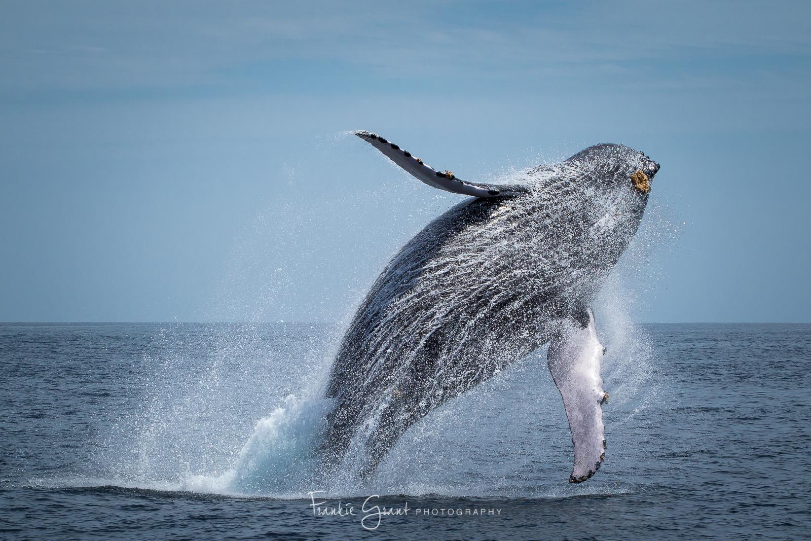 20160325-Whales-268.jpg