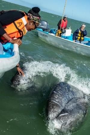 20160312-Whales-311.jpg