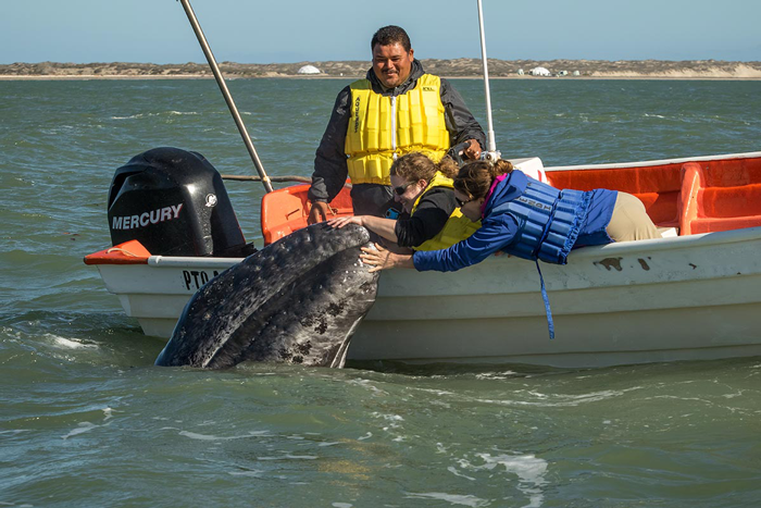 gray-whale-touch.png