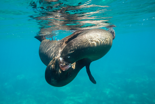 sea-lion-play.png