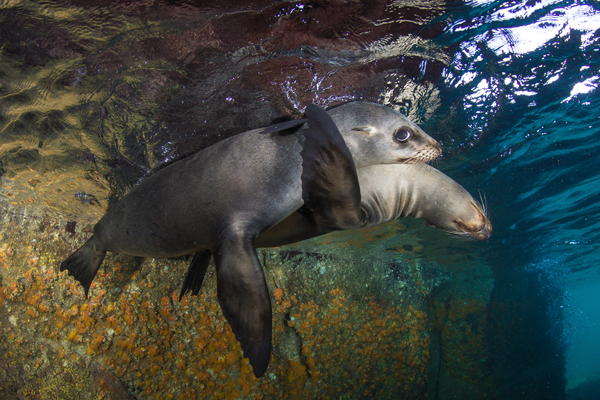 sea-lions.png