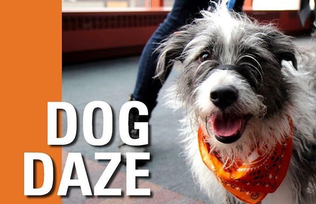 On Wednesday, July 31st we will be parked in Shoctor Alley just outside the @citadeltheatreyeg for their second annual Dog Daze of Summer event! we will be serving from 4-7pm and everyone is welcome! Bring your family, including the furry ones!  More info on their website in support of @scars_care . . #yeg #yegdogs #dogsofyeg #scars #furryfriends #yegfood #yegfoodtrucks