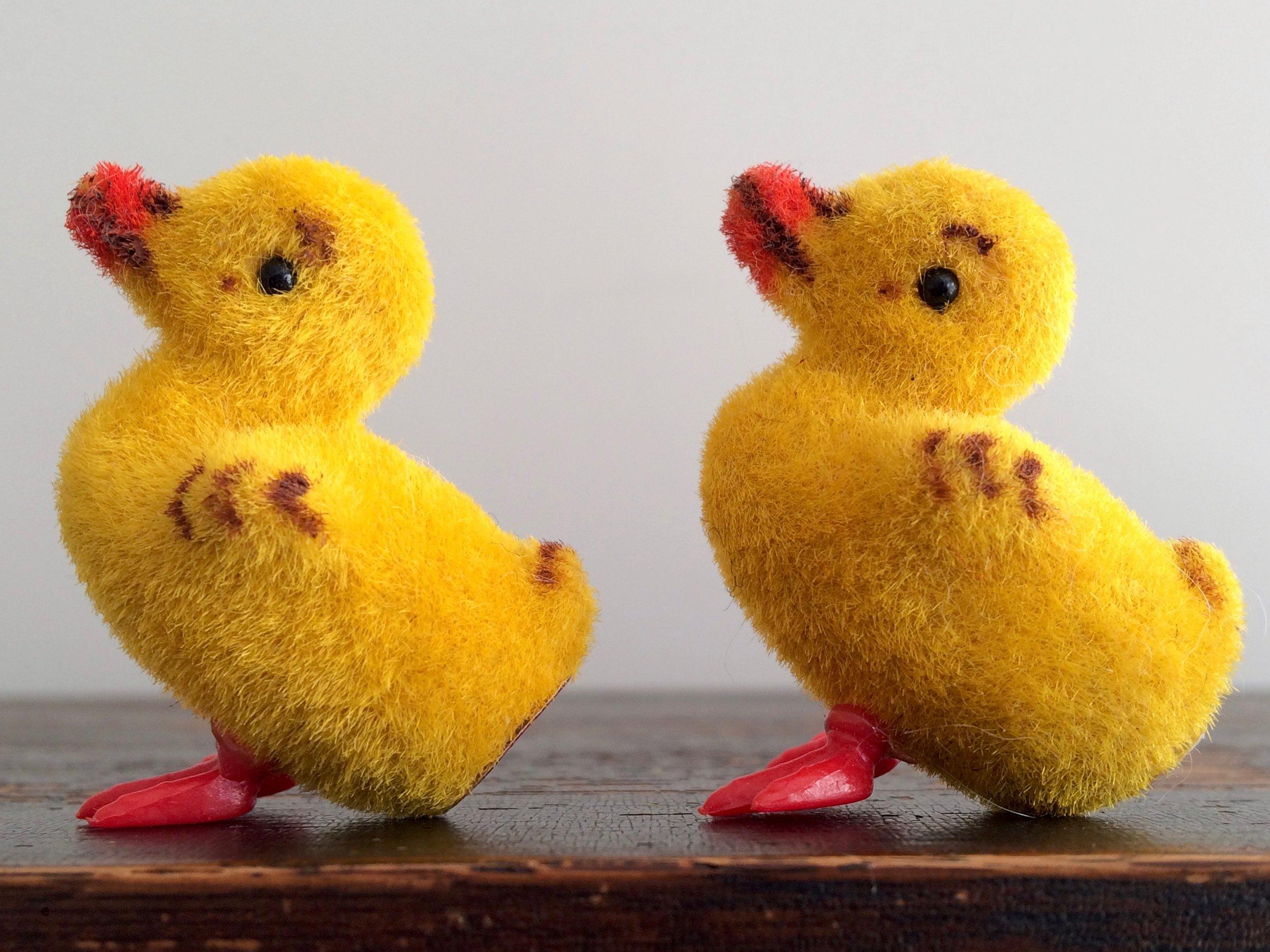 Wagner Ducklings