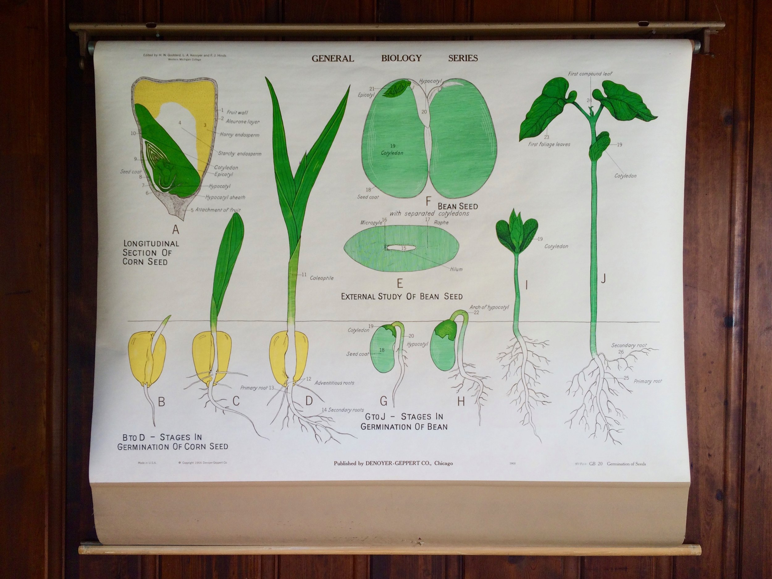 Seeds Biology Poster