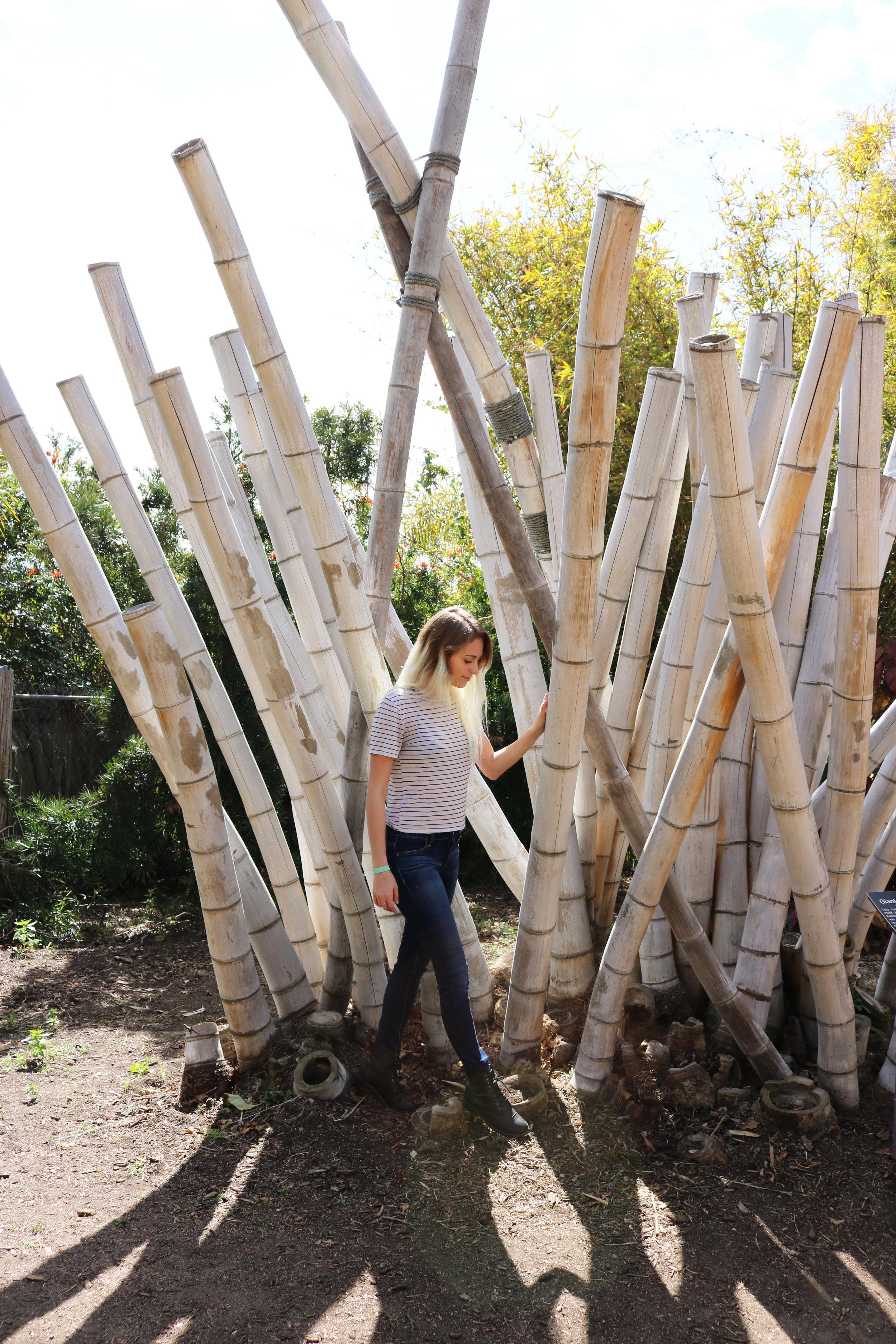 SD Botanic Garden-Kessler