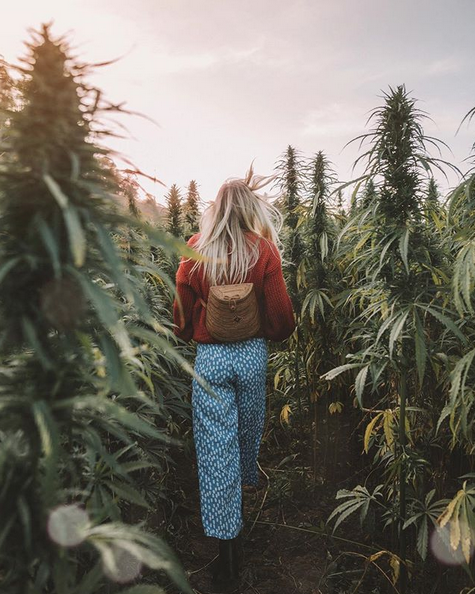 Since she recently received her degree in Nutrition & Dietetics, she educates her followers on nutritional info. This is good info that many people don't seem to know and I love that she's educating people on it- Hemp ≠ Marijuana.