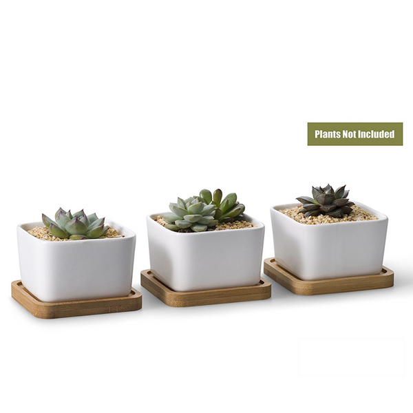 home decor succulent pots
