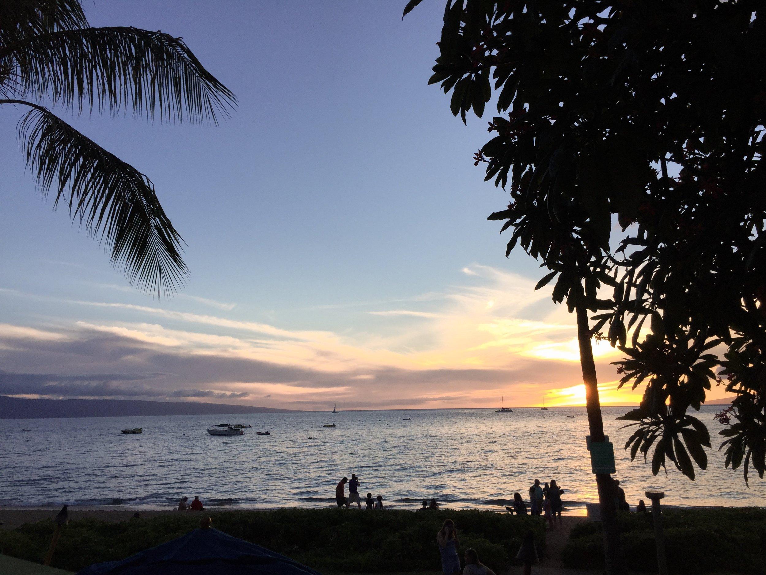maui sunset palm tree ocean beach sailboat