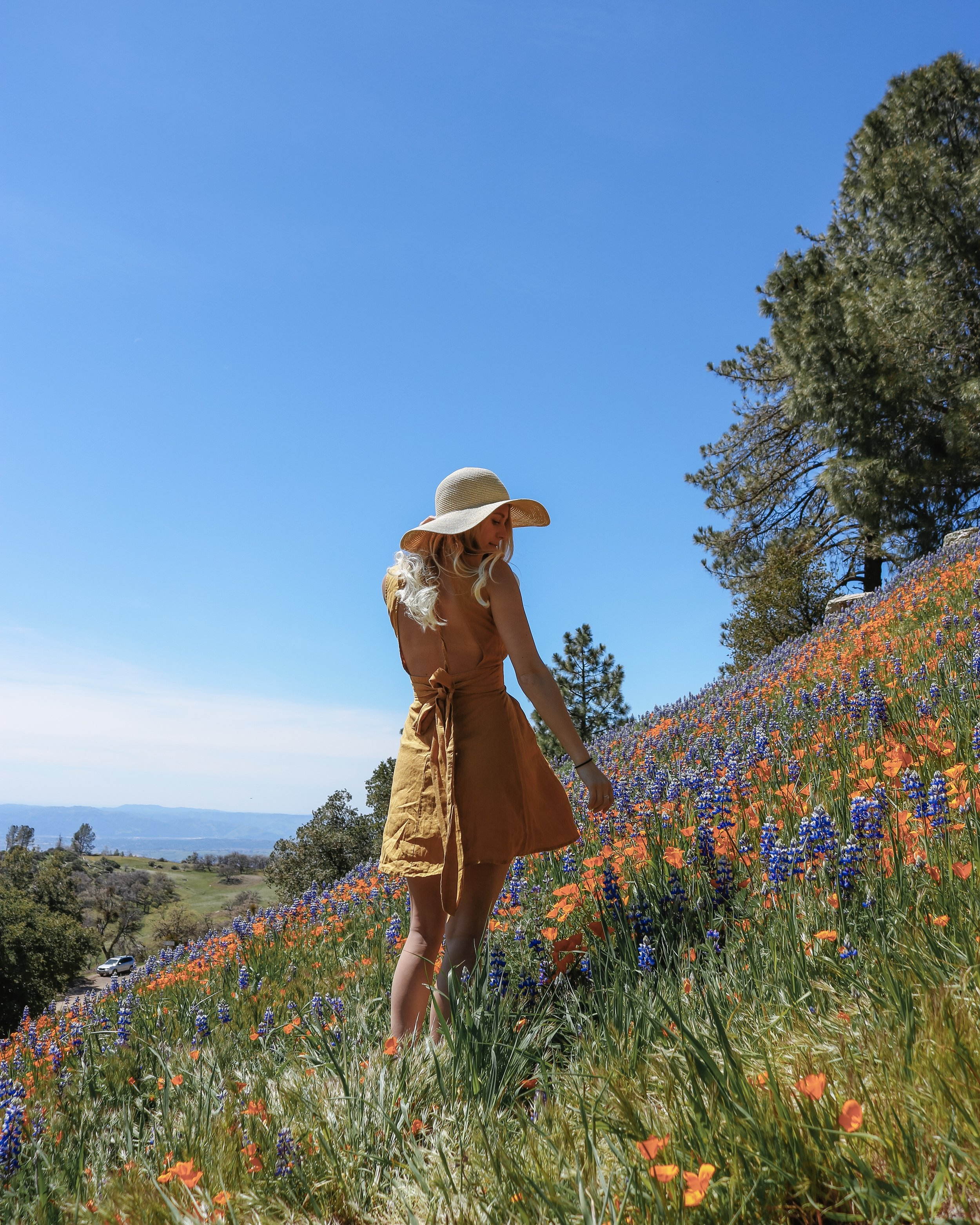 Santa Barbara Super Bloom Figueroa Mountain Santa Ynez