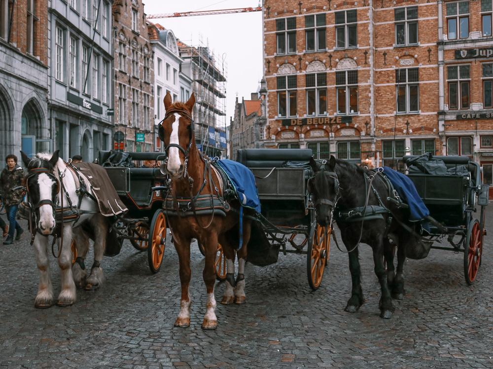 Bruges, Belgium horses in city center square