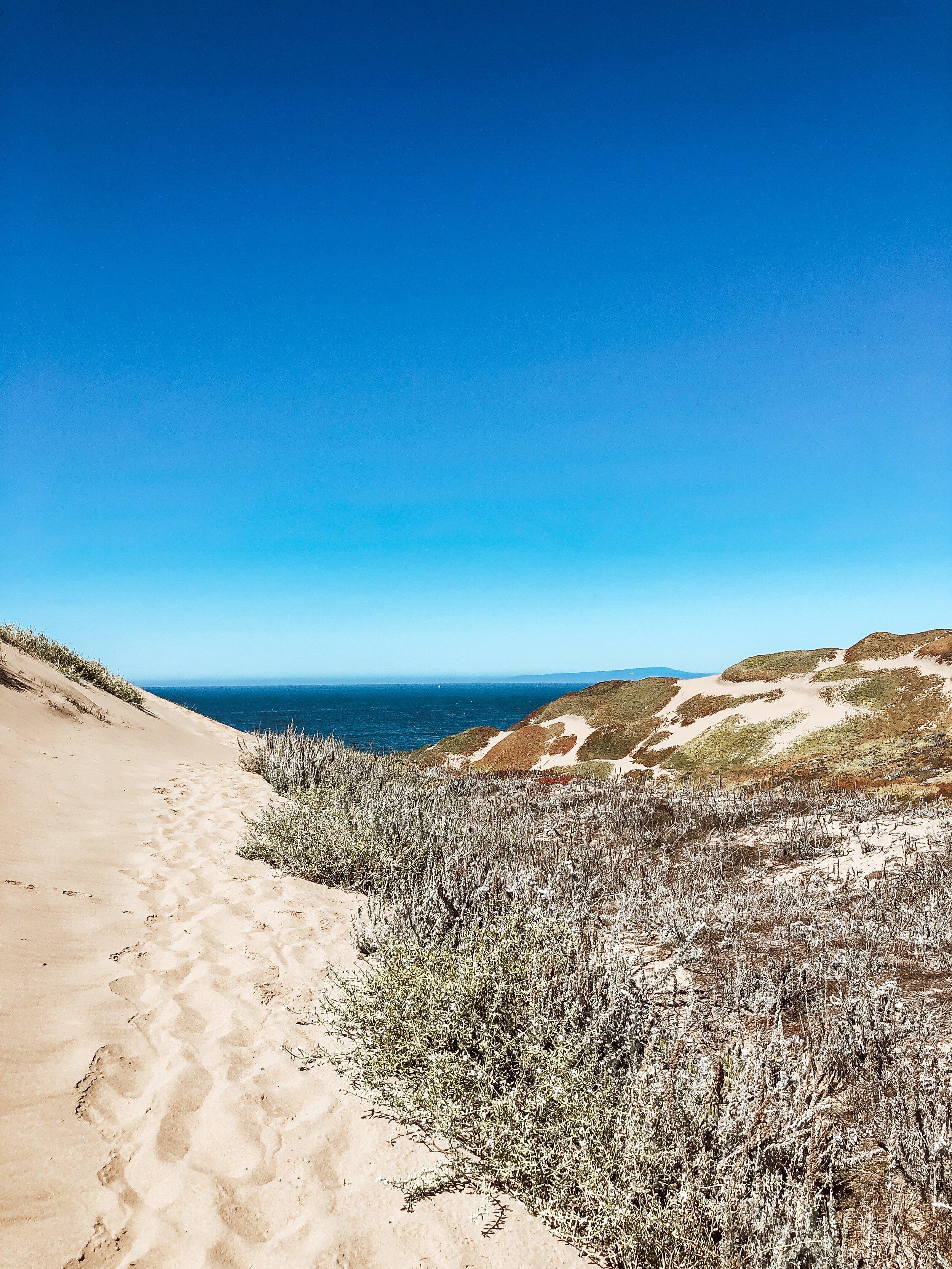 Monterey Sand Dunes
